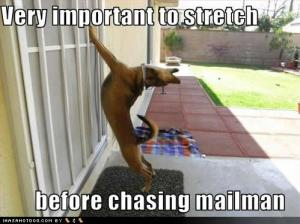 Dog Stretch