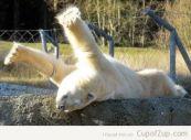 Polar Bear Stretch